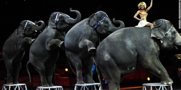 150305125126 17 Ringling Elephants Exlarge 169