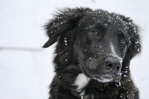 Brrrrr! It's FRIGID Outside! Scroll Down For Important Pet Safety Reminders
